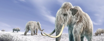 People settled in the Arctic 45 thousand years ago – the Russian scientists